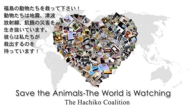Save the Animals-The World is Watching